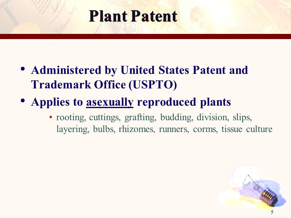 5 Administered by United States Patent and Trademark Office (USPTO) Applies to asexually reproduced plants rooting, cuttings, grafting, budding, divis