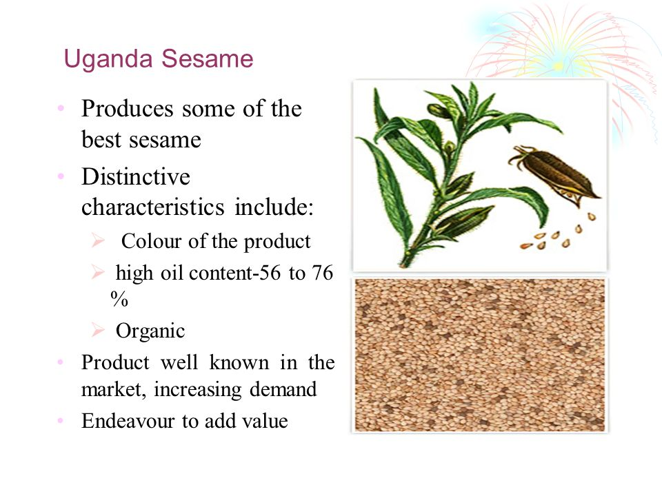 Uganda Sesame Produces some of the best sesame Distinctive characteristics include: Colour of the product high oil content-56 to 76 % Organic Product well known in the market, increasing demand Endeavour to add value