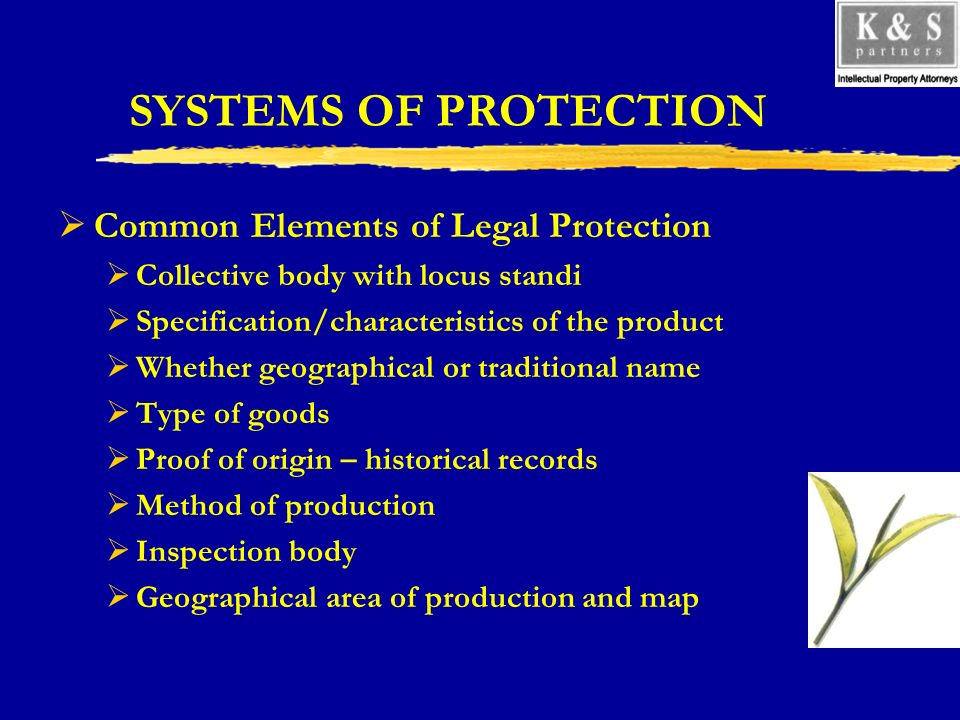 SYSTEMS OF PROTECTION Common Elements of Legal Protection Collective body with locus standi Specification/characteristics of the product Whether geogr