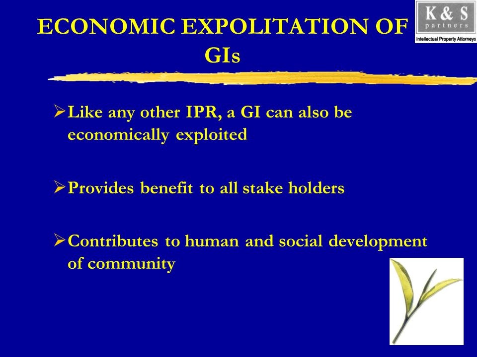 ECONOMIC EXPOLITATION OF GIs Like any other IPR, a GI can also be economically exploited Provides benefit to all stake holders Contributes to human and social development of community