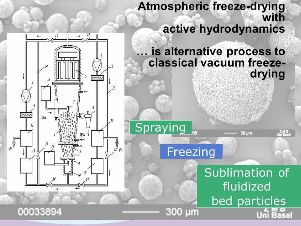 Mannitol Dextran Spraying Freezing Sublimation of fluidized bed particles Atmospheric freeze-drying with active hydrodynamics … is alternative process
