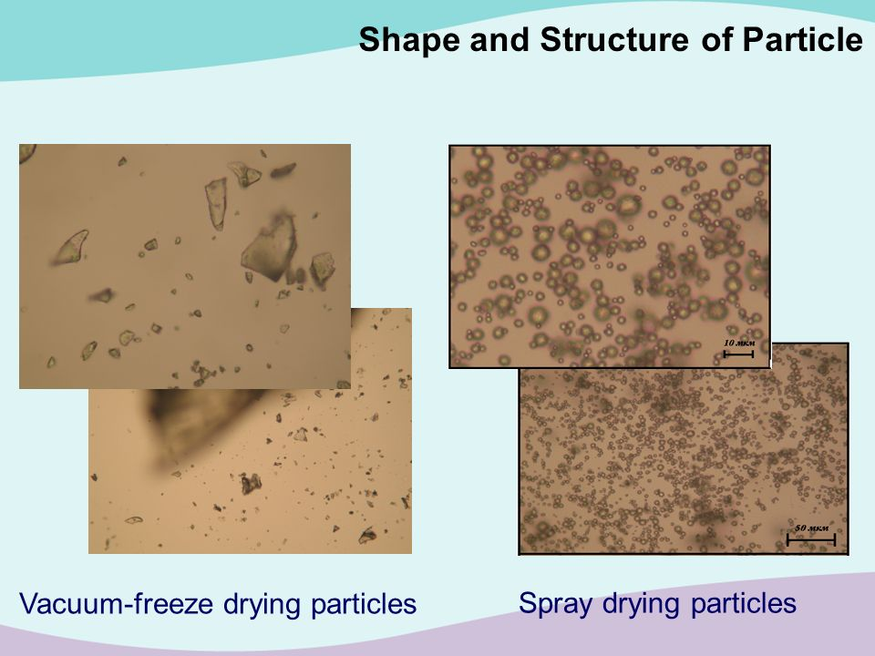 Shape and Structure of Particle Spray drying particles Vacuum-freeze drying particles