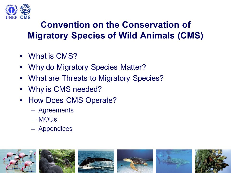 Convention on the Conservation of Migratory Species of Wild Animals (CMS) What is CMS? Why do Migratory Species Matter? What are Threats to Migratory