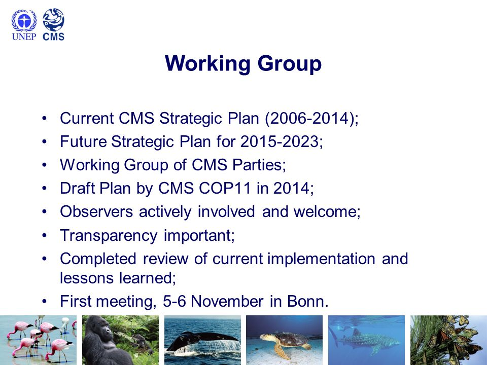 Working Group Current CMS Strategic Plan (2006-2014); Future Strategic Plan for 2015-2023; Working Group of CMS Parties; Draft Plan by CMS COP11 in 2014; Observers actively involved and welcome; Transparency important; Completed review of current implementation and lessons learned; First meeting, 5-6 November in Bonn.