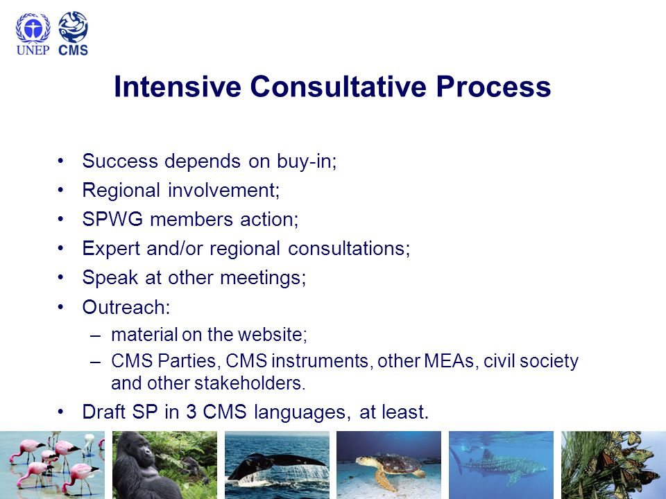 Intensive Consultative Process Success depends on buy-in; Regional involvement; SPWG members action; Expert and/or regional consultations; Speak at other meetings; Outreach: –material on the website; –CMS Parties, CMS instruments, other MEAs, civil society and other stakeholders.