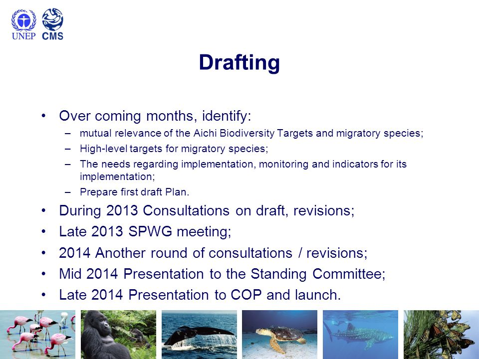 Drafting Over coming months, identify: –mutual relevance of the Aichi Biodiversity Targets and migratory species; –High-level targets for migratory species; –The needs regarding implementation, monitoring and indicators for its implementation; –Prepare first draft Plan.