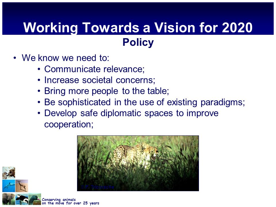 Conserving animals on the move for over 25 years Working Towards a Vision for 2020 Policy We know we need to: Communicate relevance; Increase societal concerns; Bring more people to the table; Be sophisticated in the use of existing paradigms; Develop safe diplomatic spaces to improve cooperation; © P.