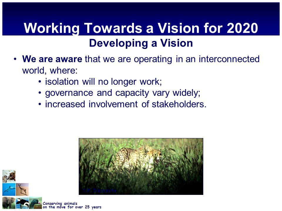 Conserving animals on the move for over 25 years Working Towards a Vision for 2020 Developing a Vision We are aware that we are operating in an interconnected world, where: isolation will no longer work; governance and capacity vary widely; increased involvement of stakeholders.