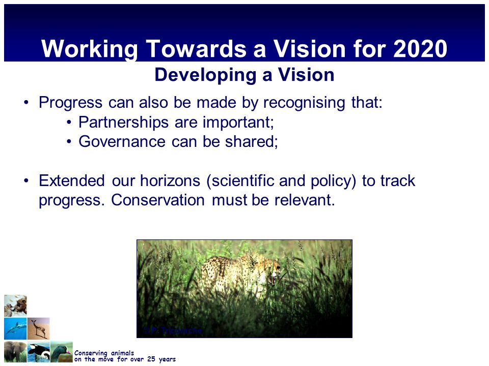 Conserving animals on the move for over 25 years Working Towards a Vision for 2020 Developing a Vision Progress can also be made by recognising that: Partnerships are important; Governance can be shared; Extended our horizons (scientific and policy) to track progress.