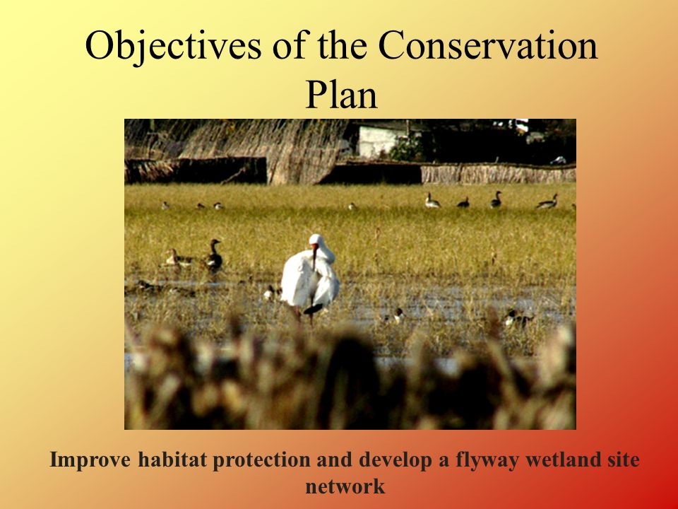Objectives of the Conservation Plan Improve habitat protection and develop a flyway wetland site network