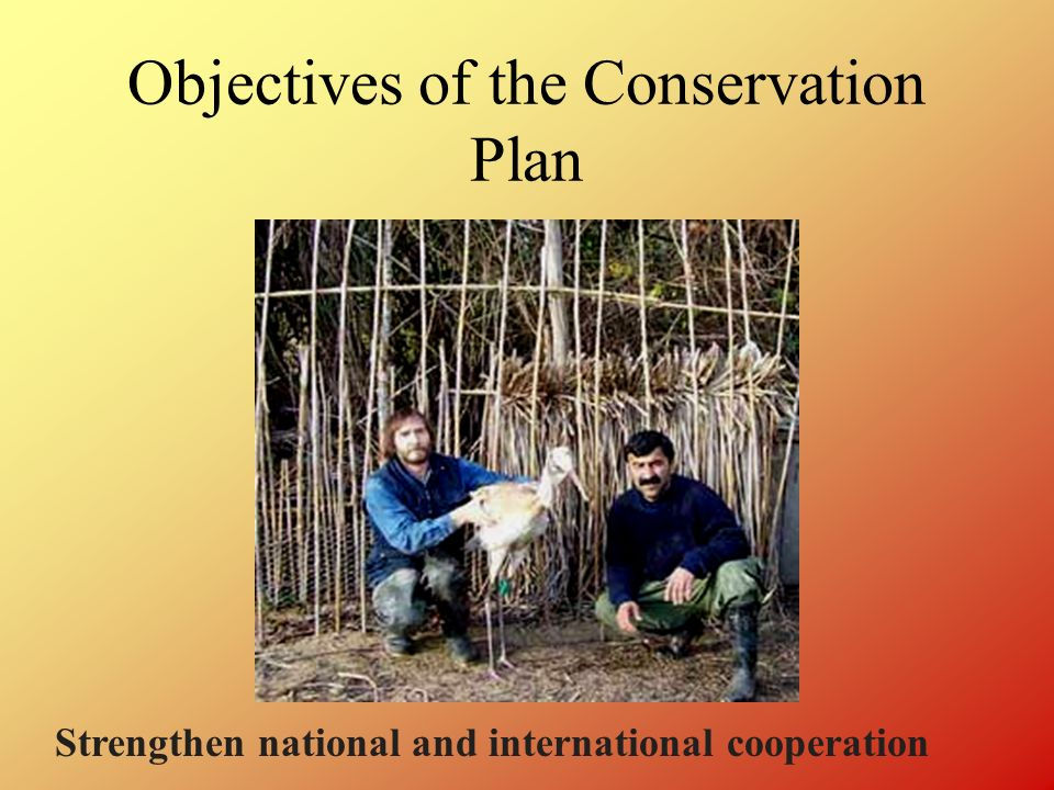 Objectives of the Conservation Plan Strengthen national and international cooperation