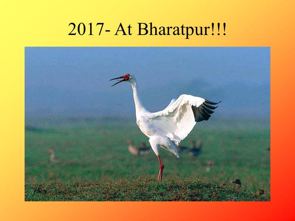 2017- At Bharatpur!!!