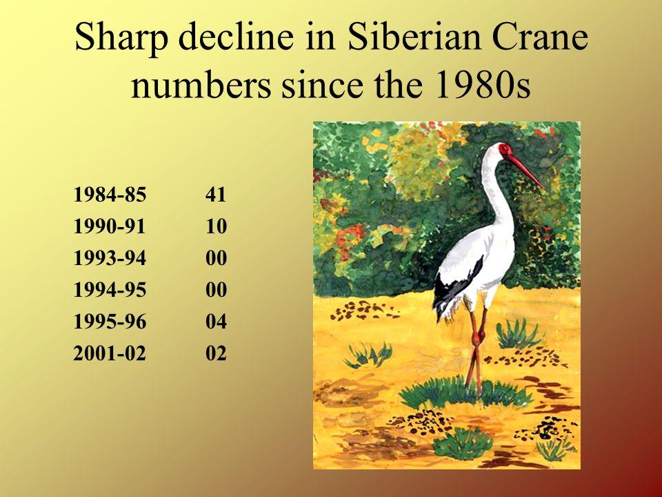 Keoladeo National Park The Last Refuge of the Siberian Cranes