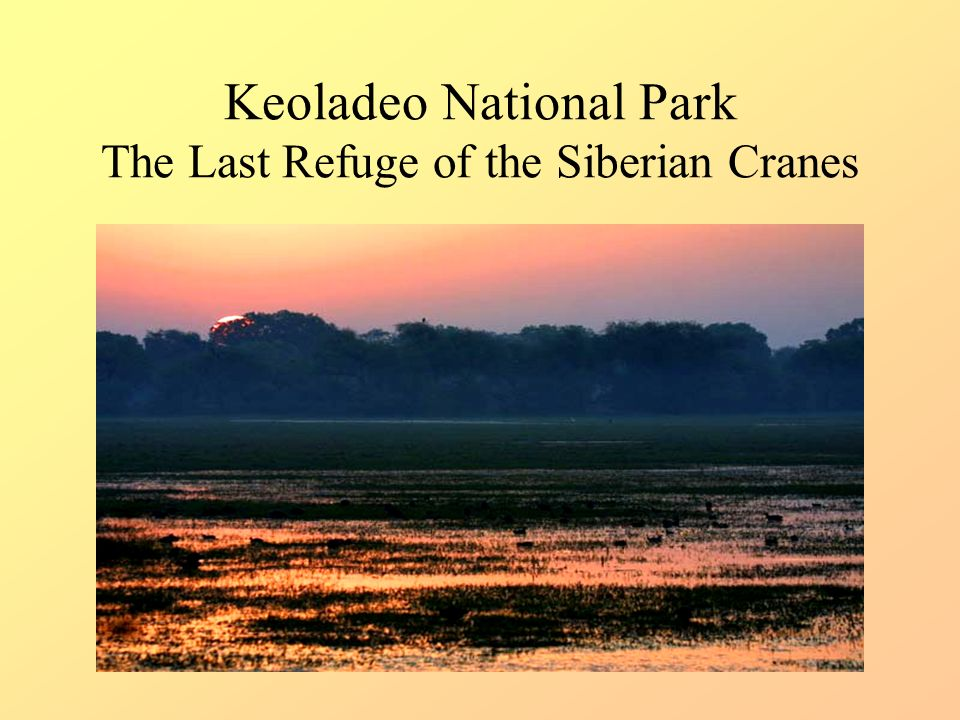 Keoladeo National Park The Last Refuge of the Siberian Cranes