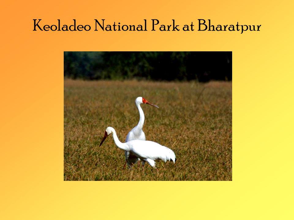 Keoladeo National Park at Bharatpur