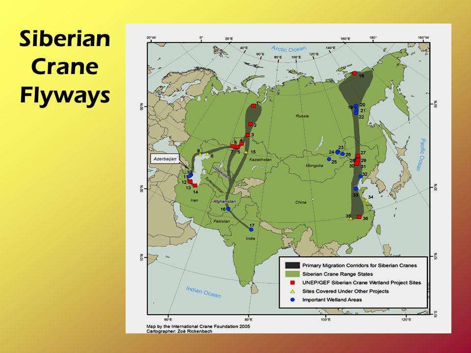 Siberian Crane Flyways