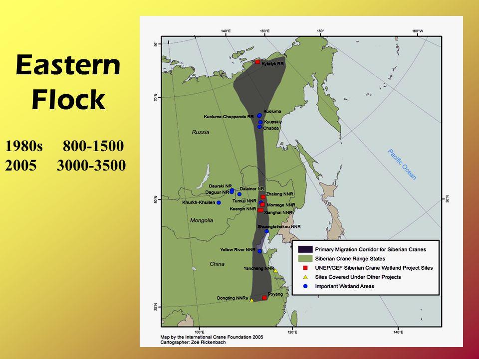 Eastern Flock 1980s 800-1500 2005 3000-3500