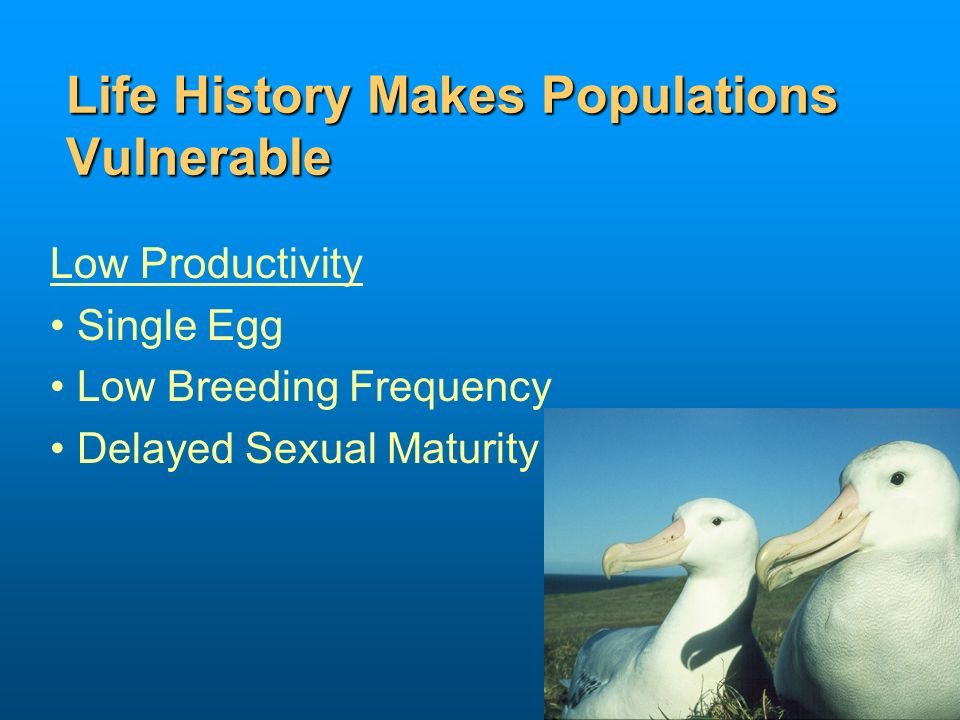 Life History Makes Populations Vulnerable Low Productivity Single Egg Low Breeding Frequency Delayed Sexual Maturity