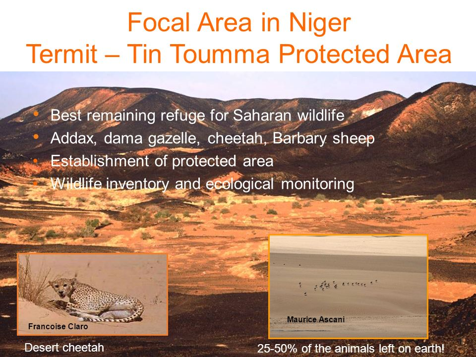 Focal Area in Niger Termit – Tin Toumma Protected Area 25-50% of the animals left on earth! Maurice Ascani Best remaining refuge for Saharan wildlife