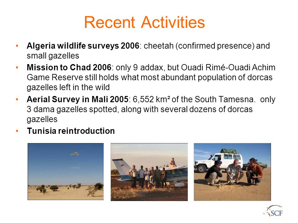Recent Activities Algeria wildlife surveys 2006: cheetah (confirmed presence) and small gazelles Mission to Chad 2006: only 9 addax, but Ouadi Rimé-Ou