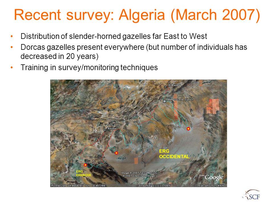 ERG OCCIDENTAL ERG ERRAOUI Recent survey: Algeria (March 2007) Distribution of slender-horned gazelles far East to West Dorcas gazelles present everyw