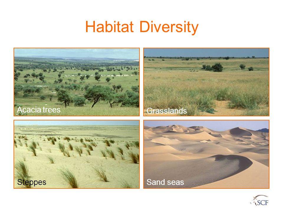 Habitat Diversity Acacia trees Steppes Grasslands Sand seas