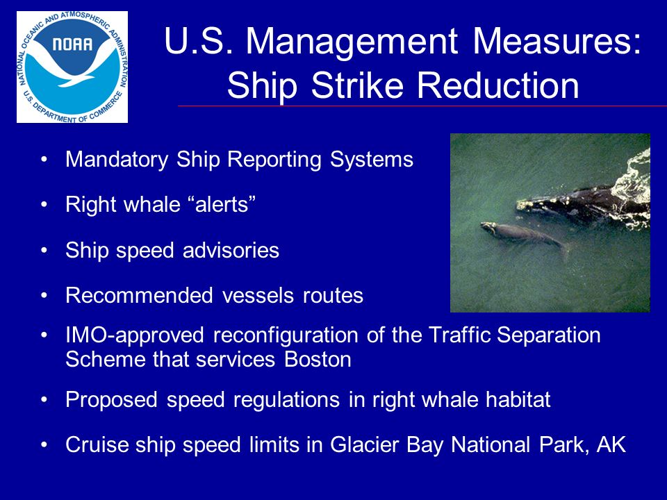U.S. Management Measures: Ship Strike Reduction Mandatory Ship Reporting Systems Right whale alerts Ship speed advisories Recommended vessels routes I