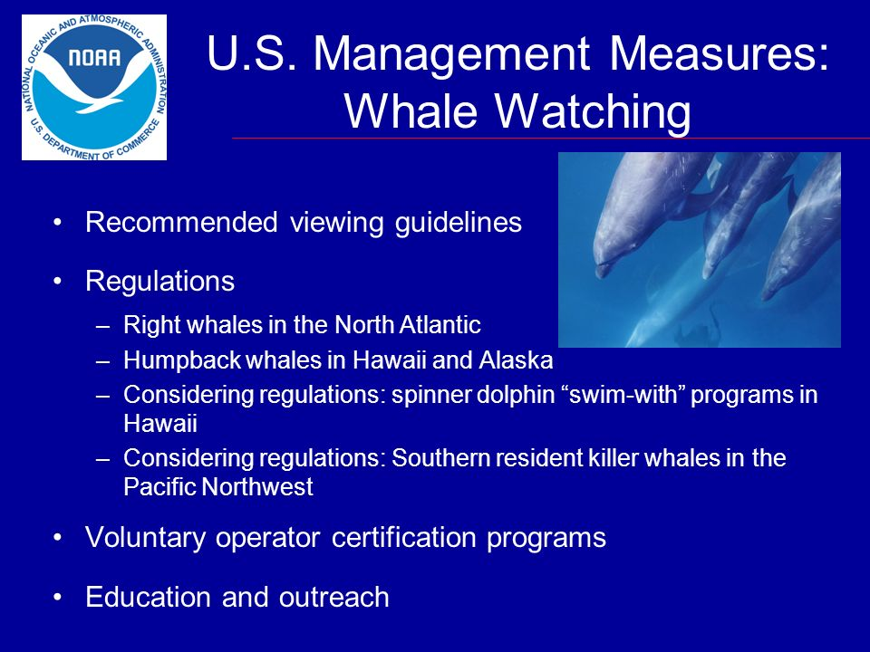 U.S. Management Measures: Whale Watching Recommended viewing guidelines Regulations –Right whales in the North Atlantic –Humpback whales in Hawaii and