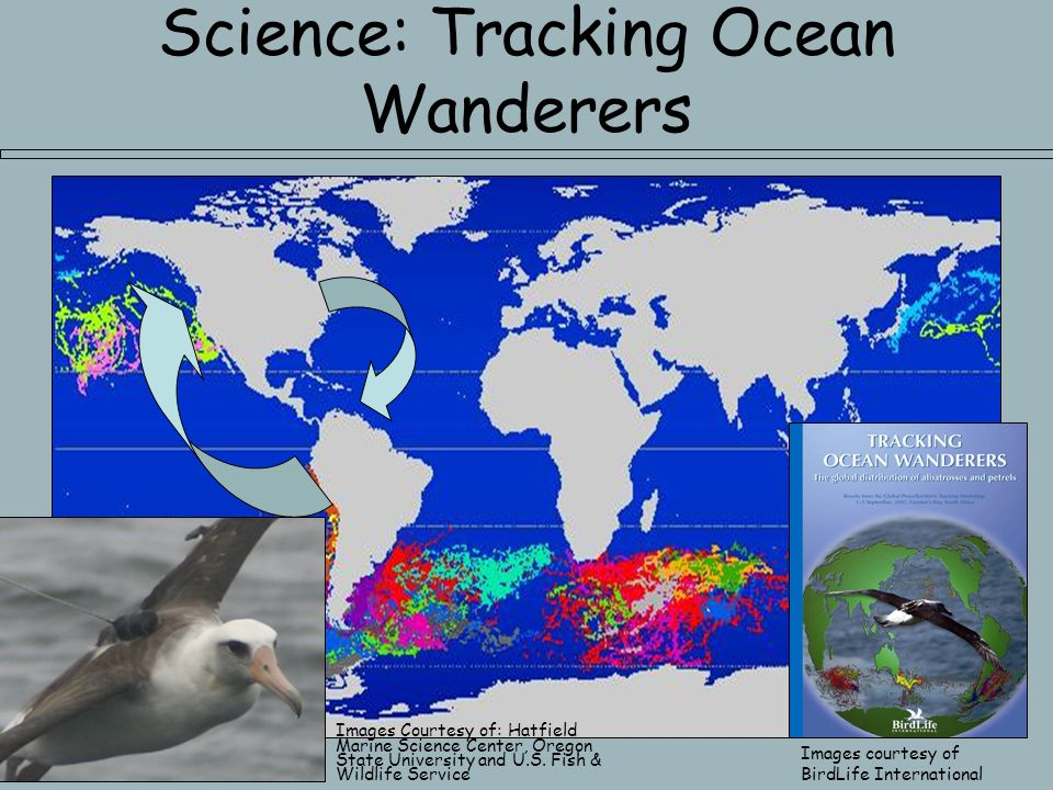 Science: Tracking Ocean Wanderers Images courtesy of BirdLife International Images Courtesy of: Hatfield Marine Science Center, Oregon State University and U.S.