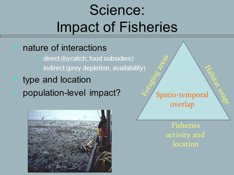 Science: Impact of Fisheries nature of interactions direct (bycatch; food subsidies) indirect (prey depletion, availability) type and location population-level impact.