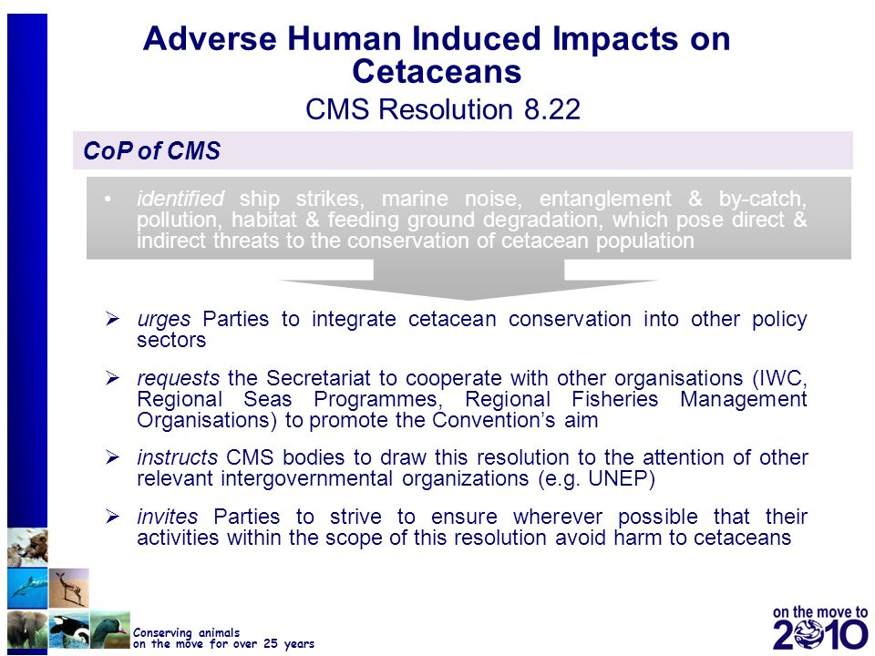 10 Conserving animals on the move for over 25 years Adverse Human Induced Impacts on Cetaceans CMS Resolution 8.22 CoP of CMS identified ship strikes,