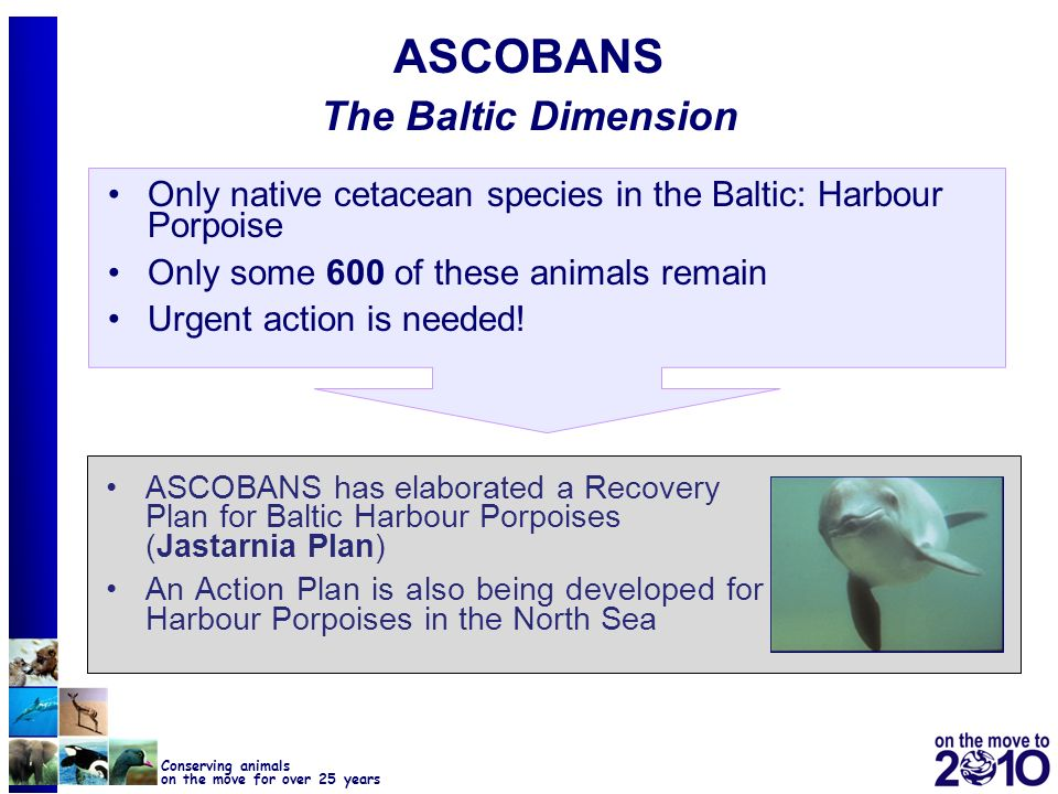 15 Conserving animals on the move for over 25 years ASCOBANS The Baltic Dimension Only native cetacean species in the Baltic: Harbour Porpoise Only so