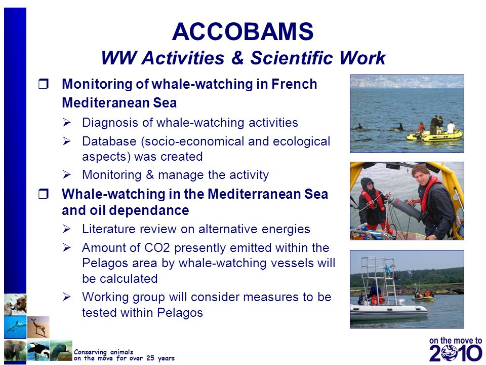 21 Conserving animals on the move for over 25 years ACCOBAMS WW Activities & Scientific Work Monitoring of whale-watching in French Mediteranean Sea D