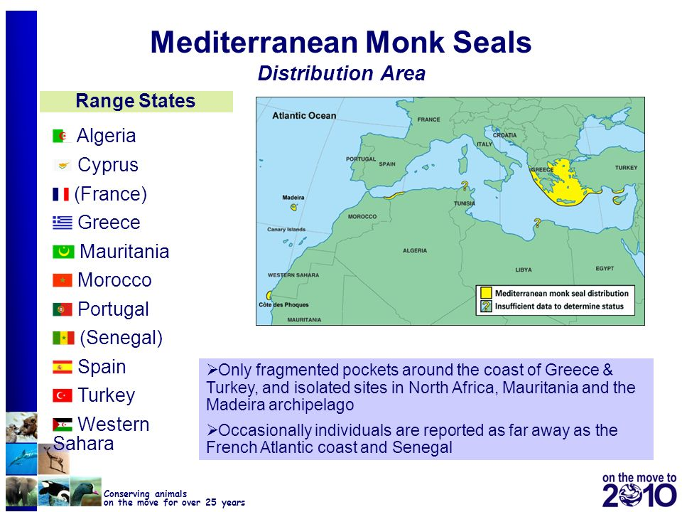 42 Conserving animals on the move for over 25 years Mediterranean Monk Seals Distribution Area Algeria Cyprus (France) Greece Mauritania Morocco Portu