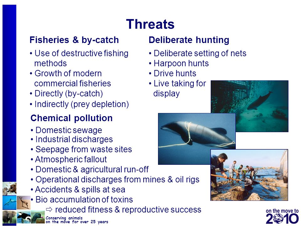 29 Conserving animals on the move for over 25 years The Year of the Dolphin 2007 Activities: 1.