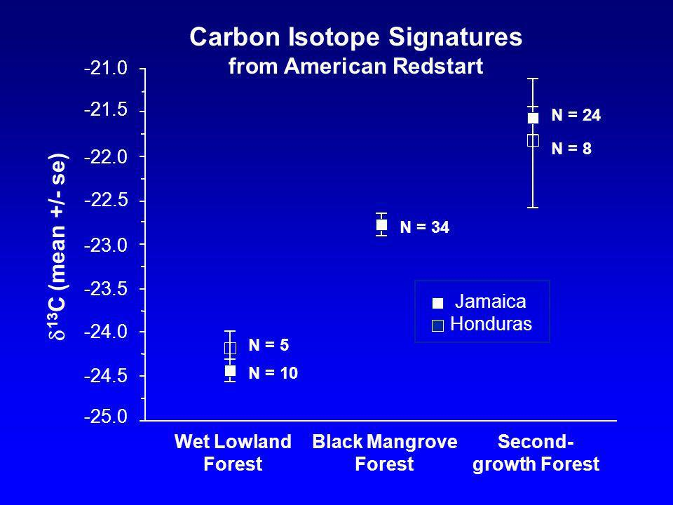 Wet Lowland Forest Black Mangrove Forest Second- growth Forest 13 C (mean +/- se) Carbon Isotope Signatures from American Redstart N = 5 N = 10 N = 34