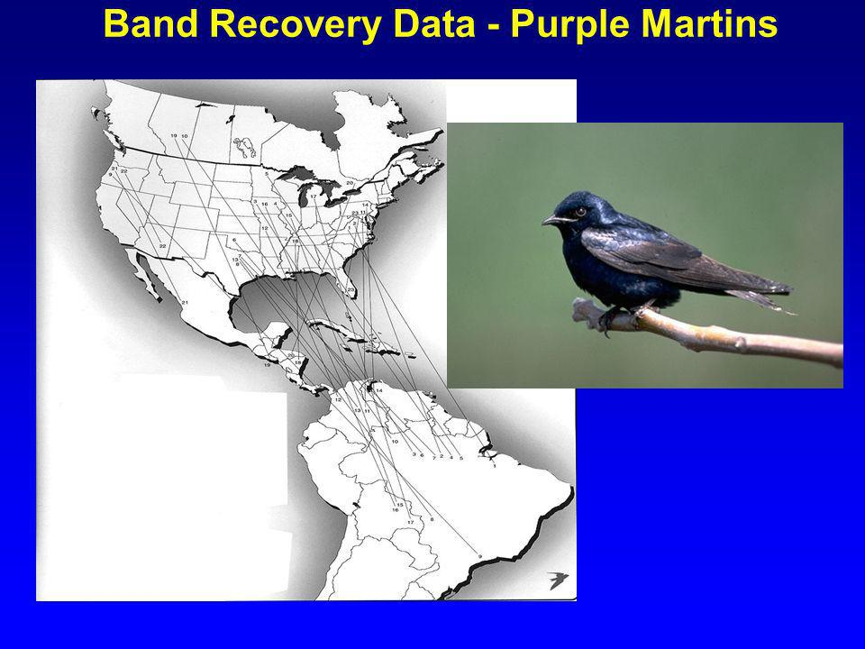 Band Recovery Data - Purple Martins