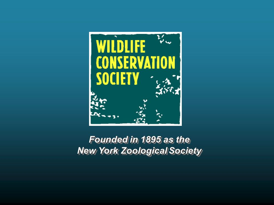 Founded in 1895 as the New York Zoological Society