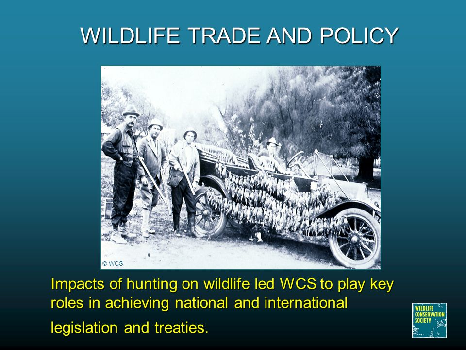 Impacts of hunting on wildlife led WCS to play key roles in achieving national and international legislation and treaties.