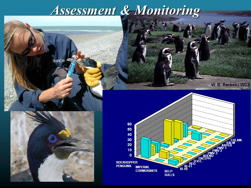W. B. Karesh / WCS Assessment & Monitoring