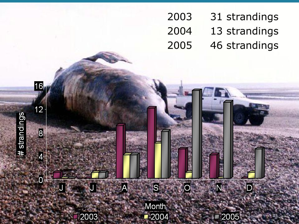 2003 31 strandings 2004 13 strandings 2005 46 strandings