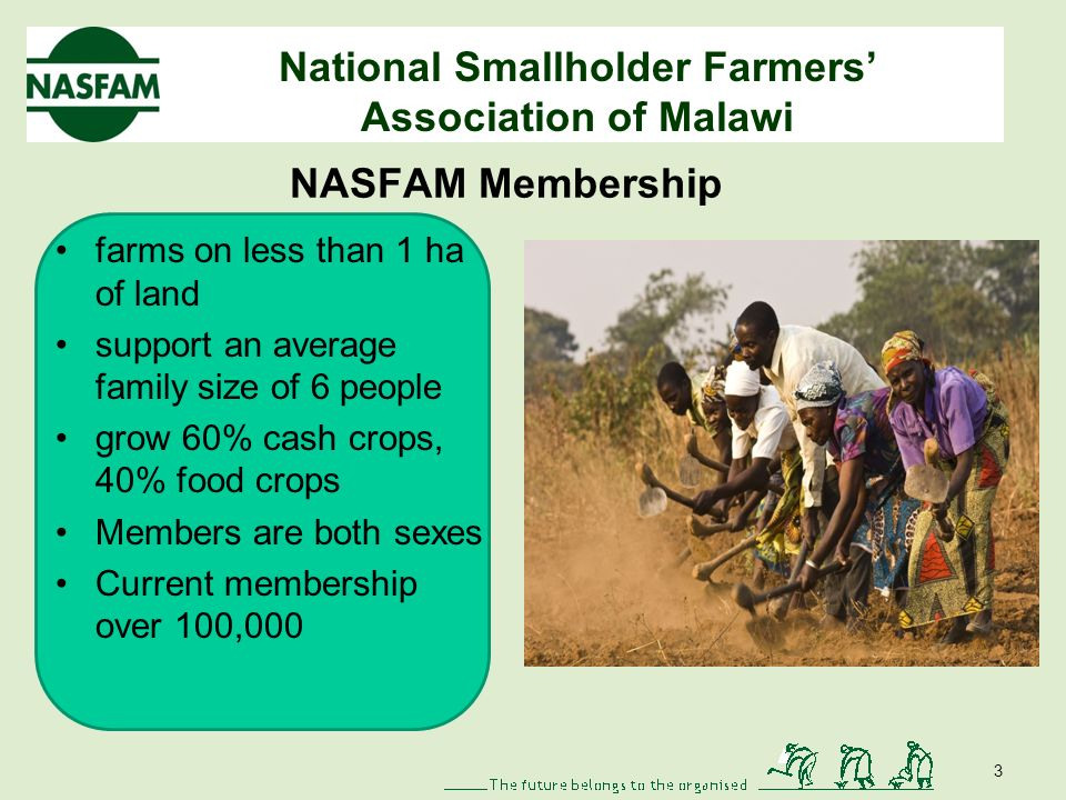 National Smallholder Farmers Association of Malawi NASFAM Membership farms on less than 1 ha of land support an average family size of 6 people grow 60% cash crops, 40% food crops Members are both sexes Current membership over 100,000 3