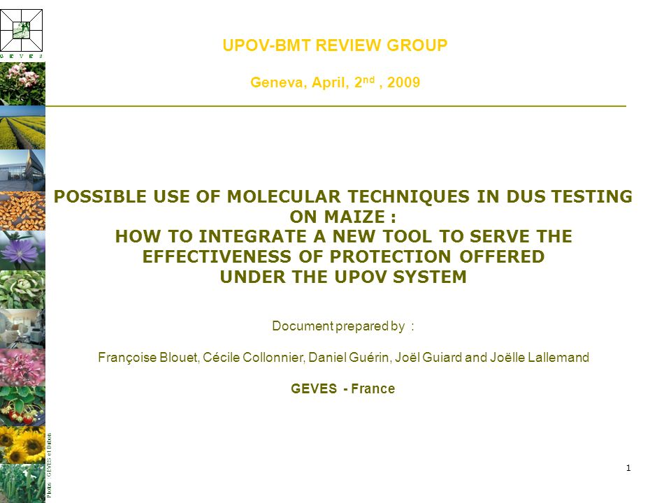 1 UPOV-BMT REVIEW GROUP Geneva, April, 2 nd, 2009 POSSIBLE USE OF MOLECULAR TECHNIQUES IN DUS TESTING ON MAIZE : HOW TO INTEGRATE A NEW TOOL TO SERVE