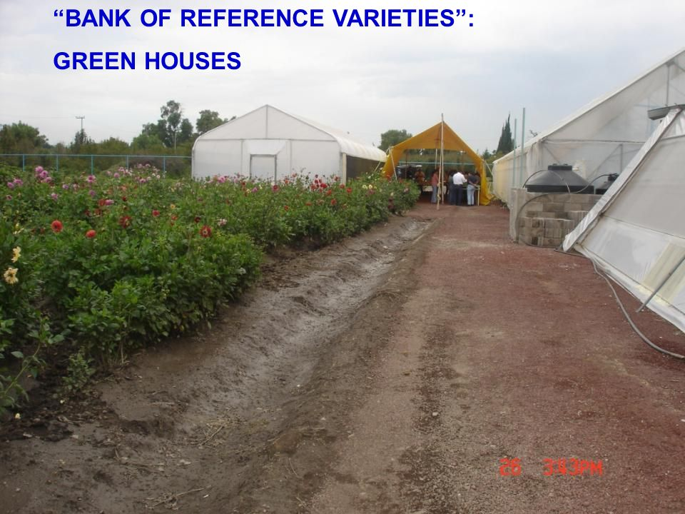 BANK OF REFERENCE VARIETIES: GREEN HOUSES