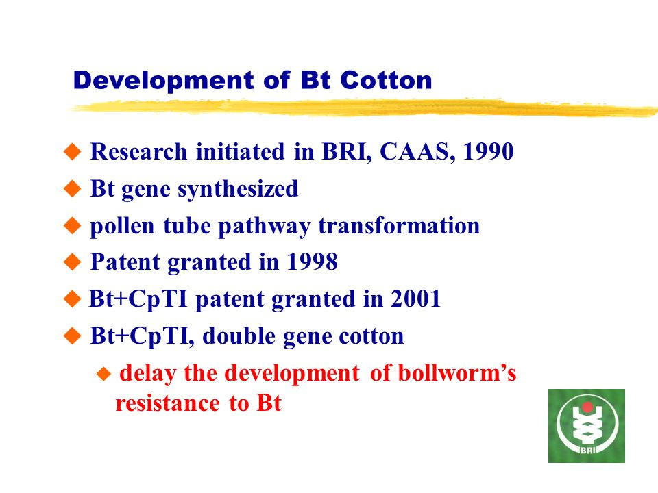 Development of Bt Cotton Research initiated in BRI, CAAS, 1990 Bt gene synthesized pollen tube pathway transformation Patent granted in 1998 Bt+CpTI patent granted in 2001 Bt+CpTI, double gene cotton delay the development of bollworms resistance to Bt