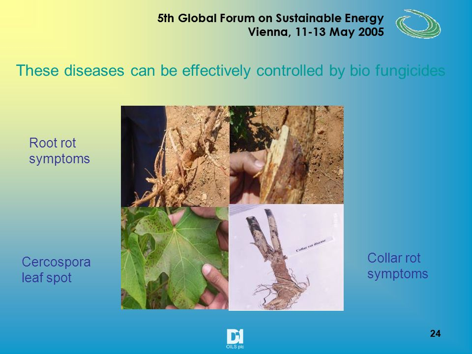 23 5th Global Forum on Sustainable Energy Vienna, 11-13 May 2005 23 5th Global Forum on Sustainable Energy Vienna, 11-13 May 2005 Fruit borer Leaf webber Achaea janata Weaver caterpillar Calidea bug These pests can be effectively controlled by bio pesticides Mite infestation