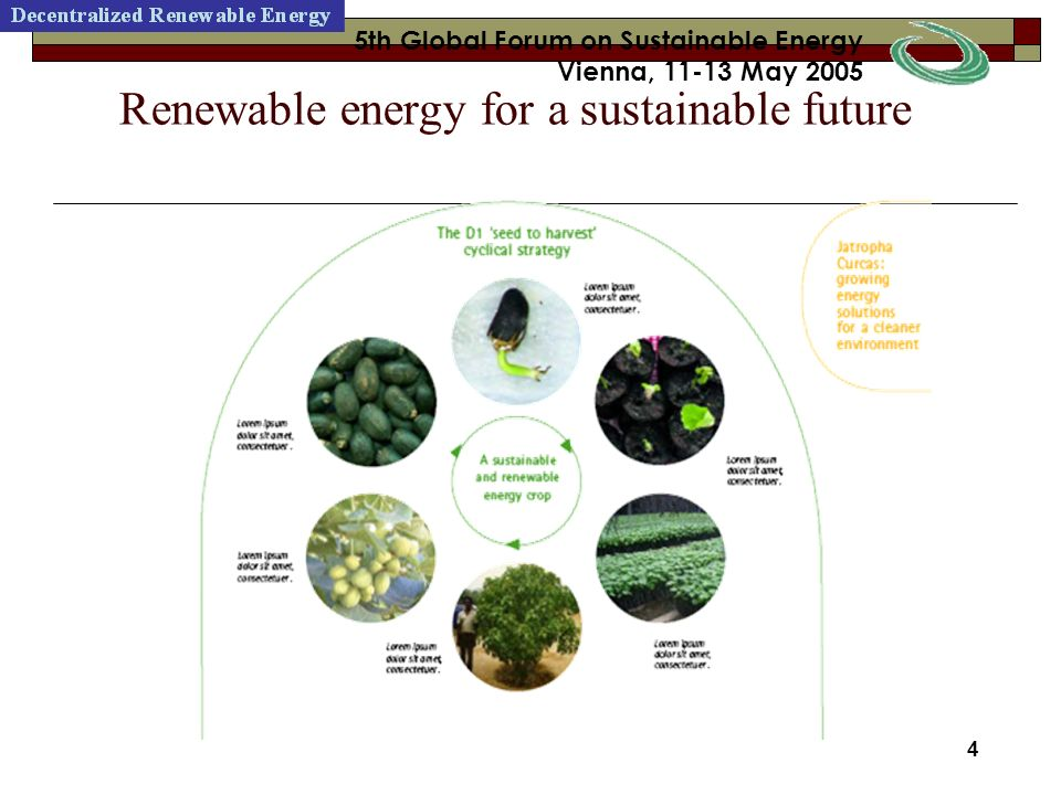 24 5th Global Forum on Sustainable Energy Vienna, 11-13 May 2005 24 5th Global Forum on Sustainable Energy Vienna, 11-13 May 2005 Root rot symptoms Cercospora leaf spot Collar rot symptoms These diseases can be effectively controlled by bio fungicides