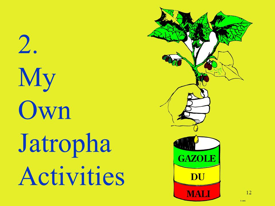12 2. My Own Jatropha Activities