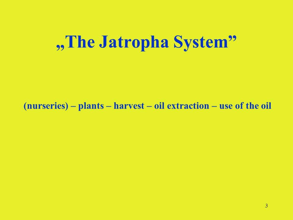 3 The Jatropha System (nurseries) – plants – harvest – oil extraction – use of the oil