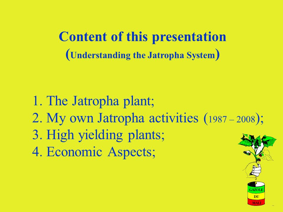 5 1. The Jatropha plant; 2. My own Jatropha activities ( 1987 – 2008 ); 3. High yielding plants; 4. Economic Aspects; Content of this presentation ( U